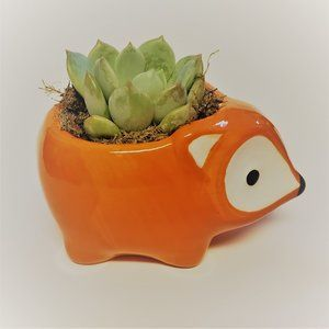 Other - Ceramic Fox Planter with Succulent